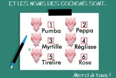 Des noms pour nos six petits cochons