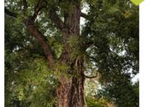 Retour sur le concours de l'arbre de l'année